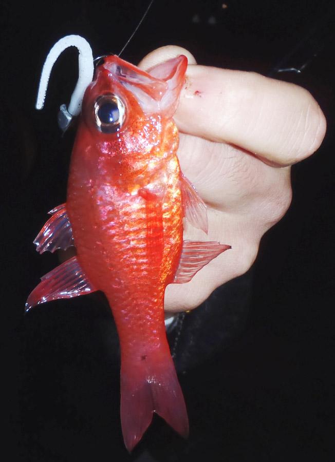 pescare a light rock fishing