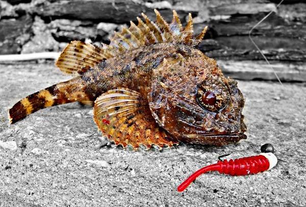 Pescare-light-rockfishing-giorno