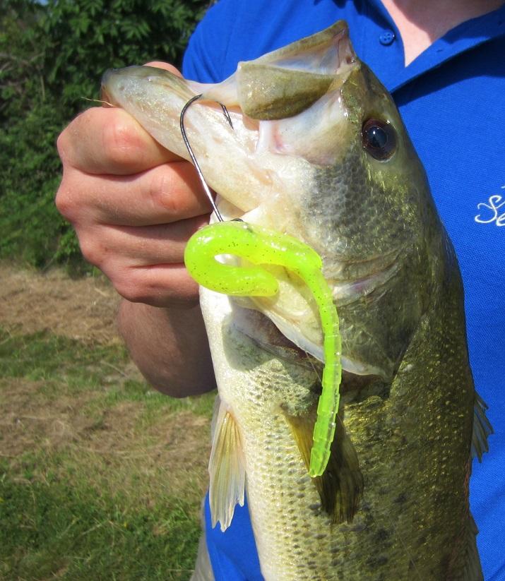 pescare il blackbass