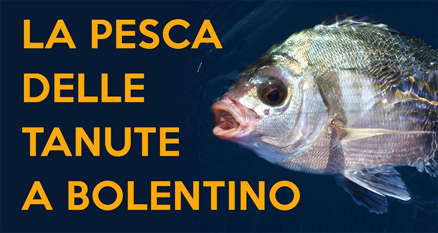 nuova collezione negozio di sconto Vendita scontata 2019 La pesca della Tanuta a Bolentino con canna - Pesca Fishing Shop