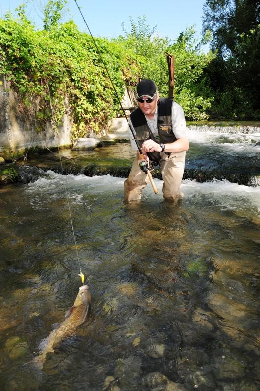 pescare il cavedano