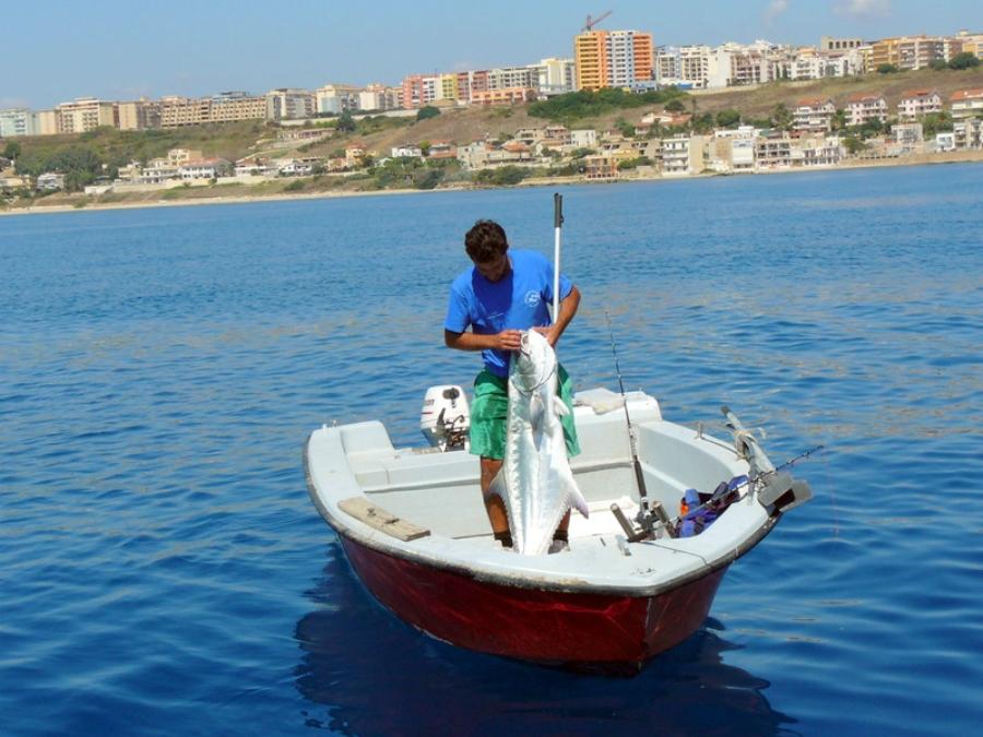 Leccia amia pescata a drifting dalla barca