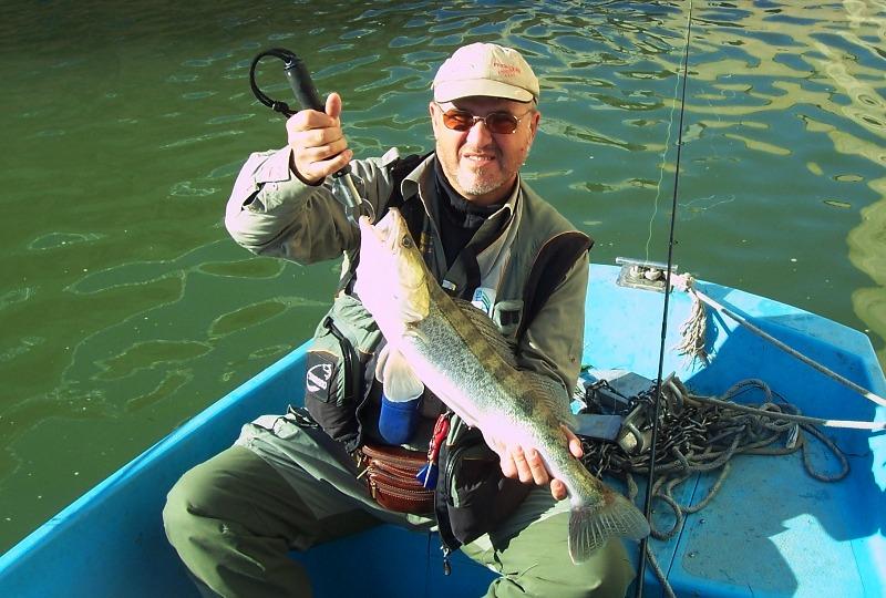 sandre poisson carnassier