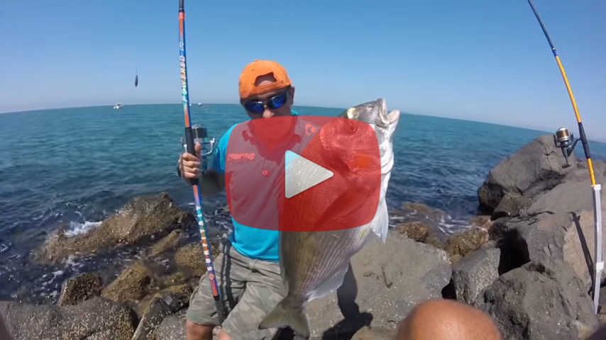 video-pesca-orata-granchio